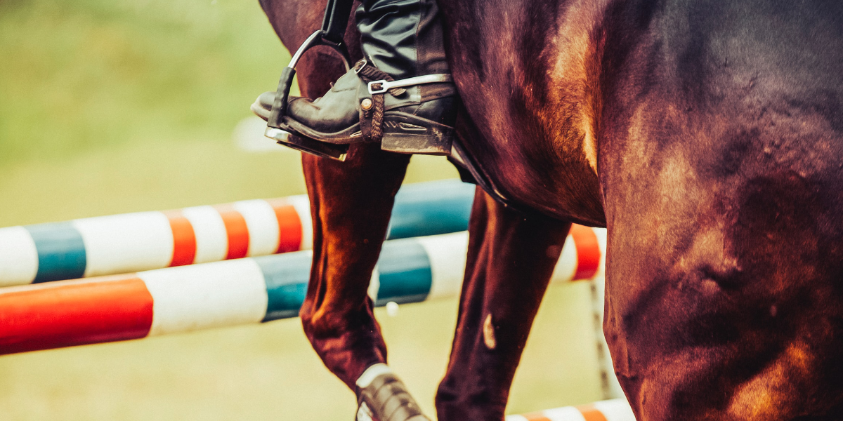 show jumping cover